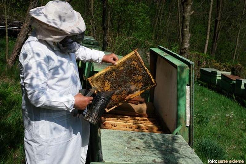 apicultor(1)