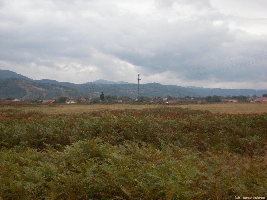 zona Gai