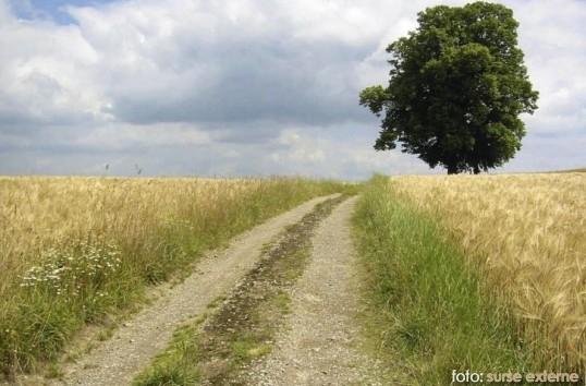 drumuri agricole