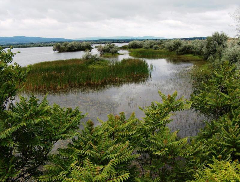 Ostrovul Moldova Veche