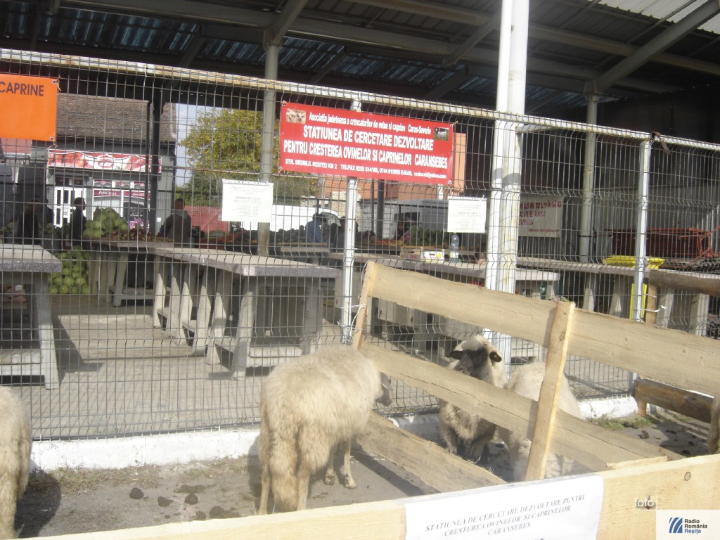 Targ de animale la Caransebes 2