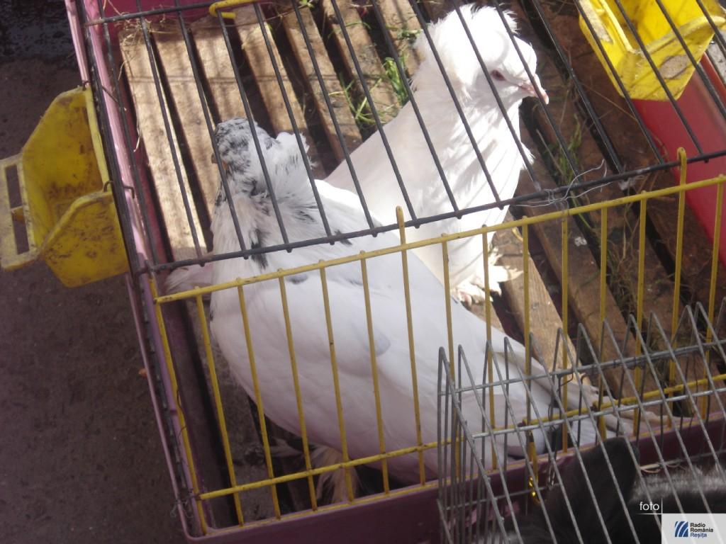 Targ de animale la Caransebes 4