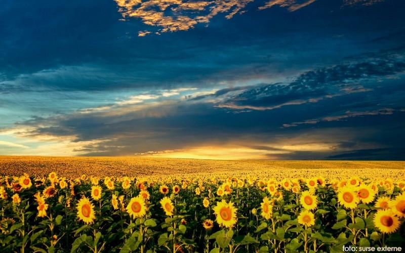 camp floarea soarelui