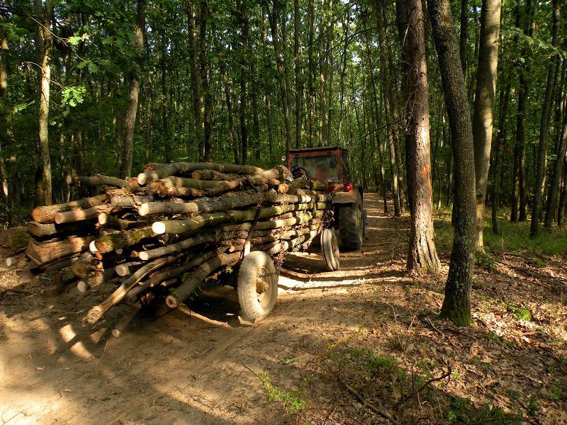 hoti de lemne