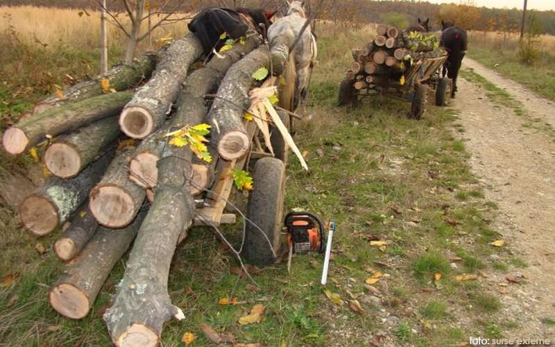 lemne furat