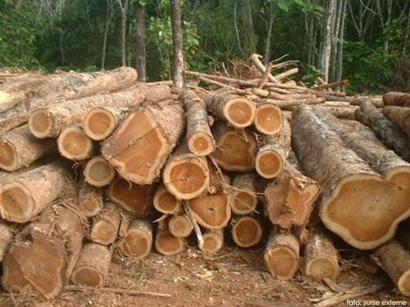 lemn-pe-picior