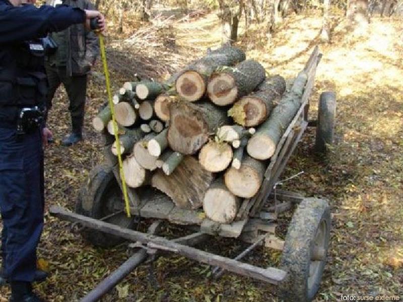 furat lemne