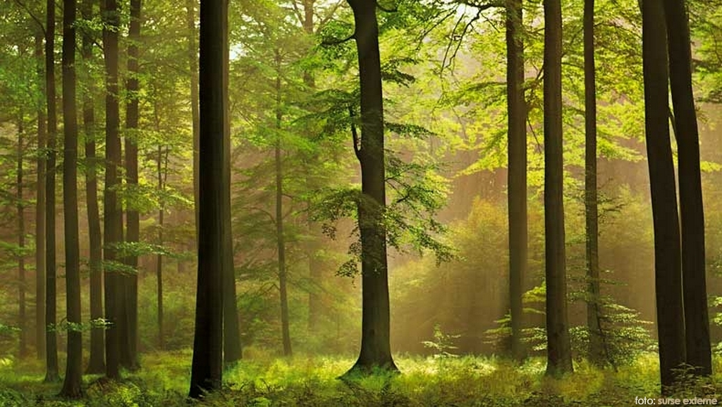 green_forest_1_06158500