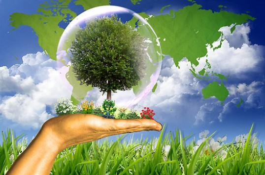 proiecte-de-mediu