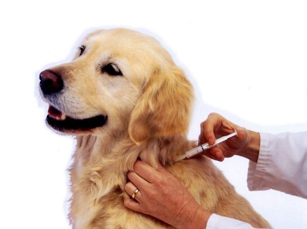 vaccinare-caine