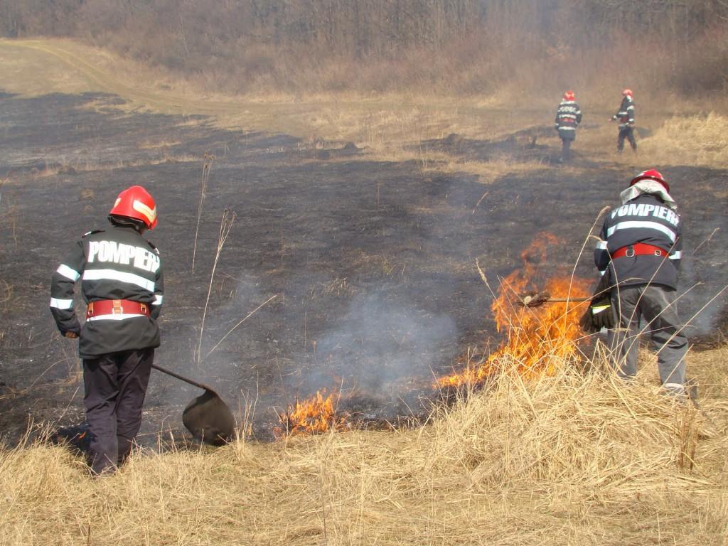 foc-vegetatie