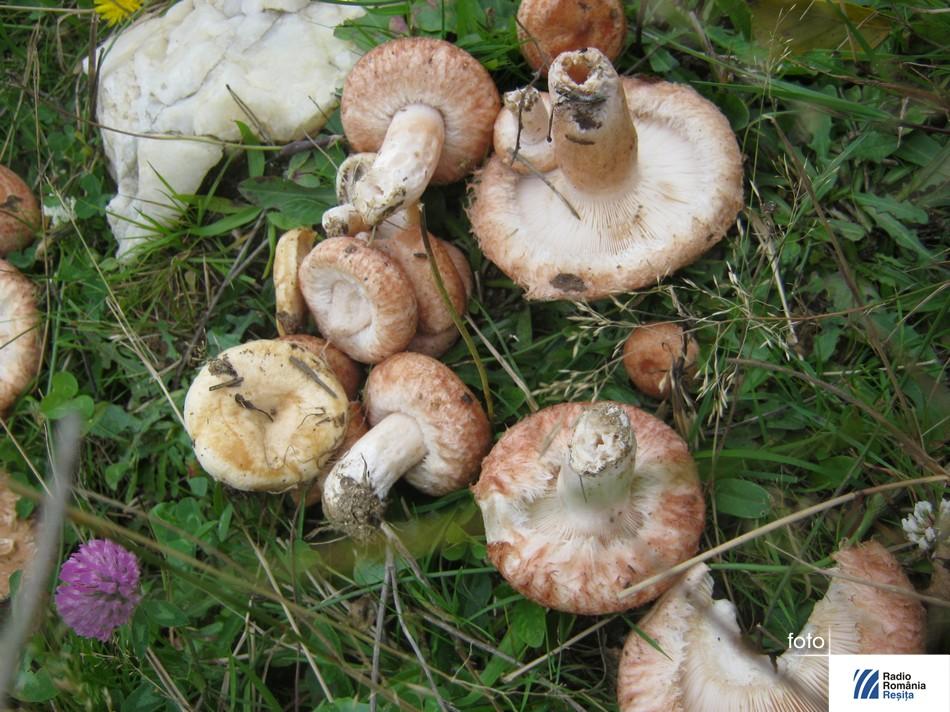 ciuperci (3)