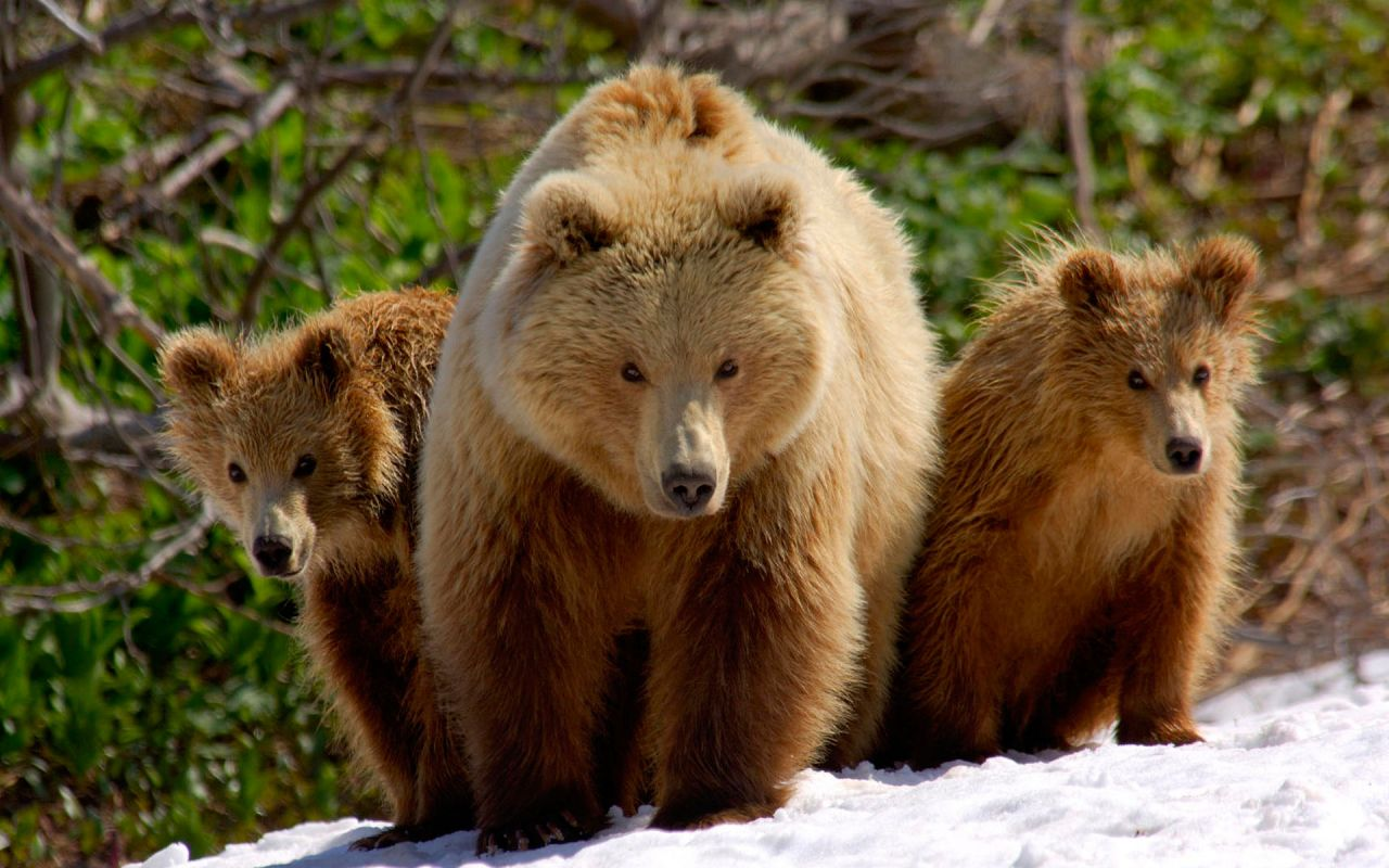Familie-De-Ursi