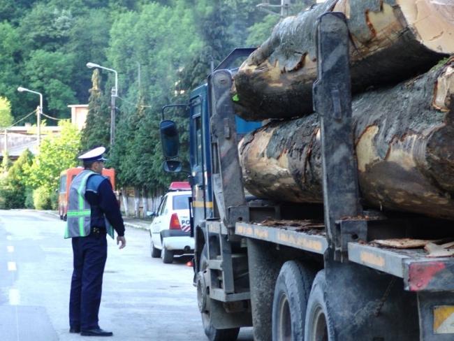 hoti-lemne