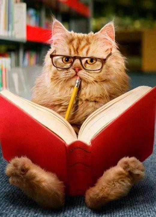 pisica-intelectuala-cu-ochelari