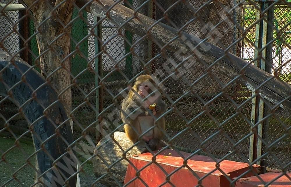 gradina zoologica3