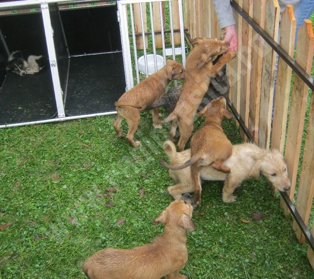 adoptii-caini-9