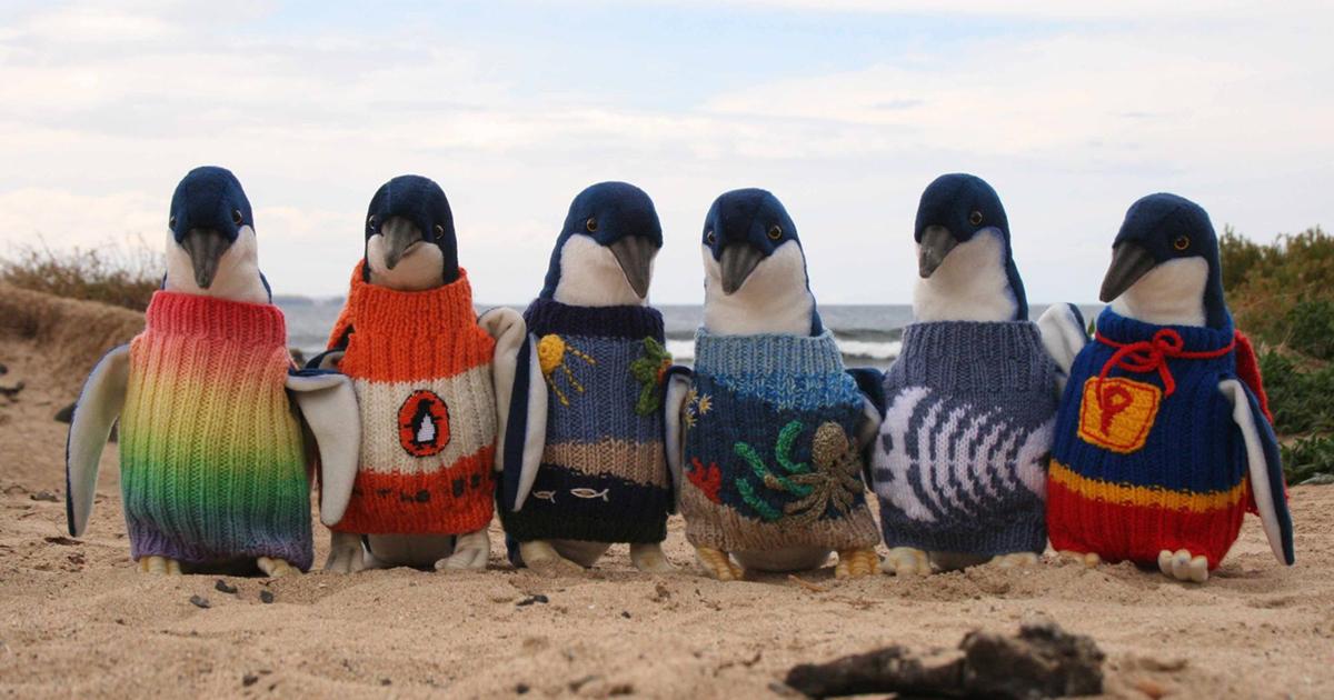 costume tricotate pinguini