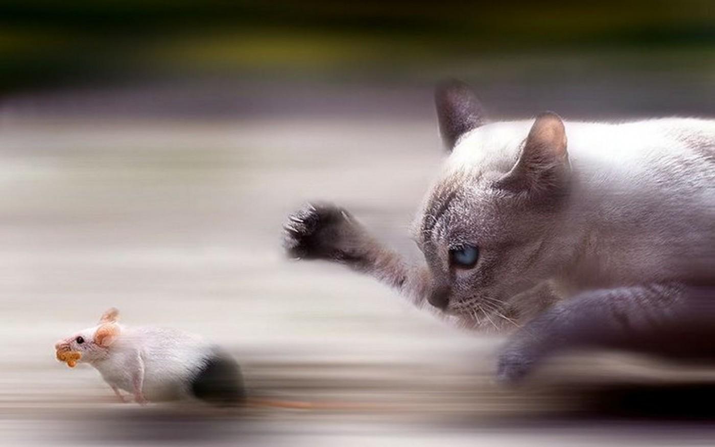 pisica-alearga-dupa-soarece