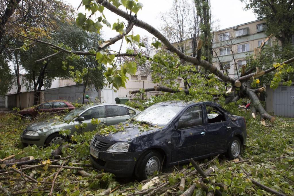copac cazut 7
