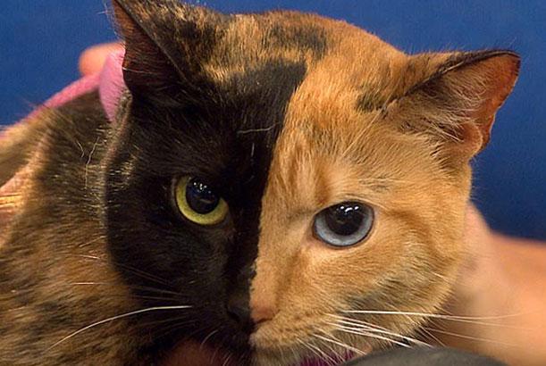 pisica-blonda-cu-doua-fete